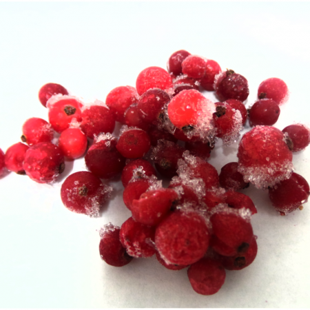 IQF RED CURRANT